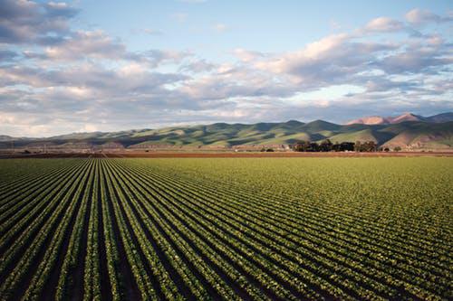 农业板块涨幅强势!中央一号文件释出利好聚焦行业短板?
