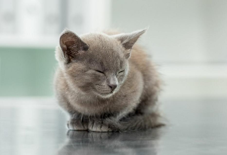 中国撸猫简史